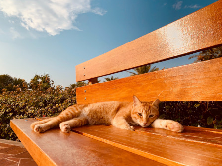 Kitten on bench