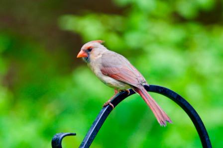 Oiseau sur une branche de fer forgé