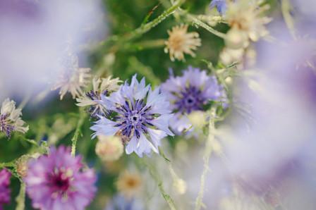 Fleurs colorées avec effet bokeh