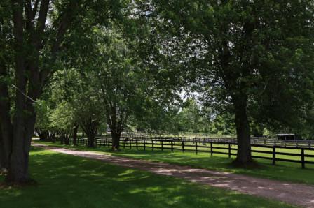 Barrières de corral à chevaux entourées d'arbres